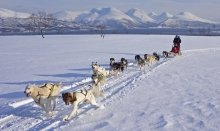 Discover the Arctic lifestyle by activities