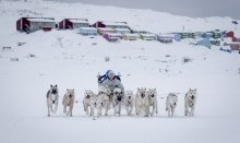 Try Dog sledding - a unique nordic experience
