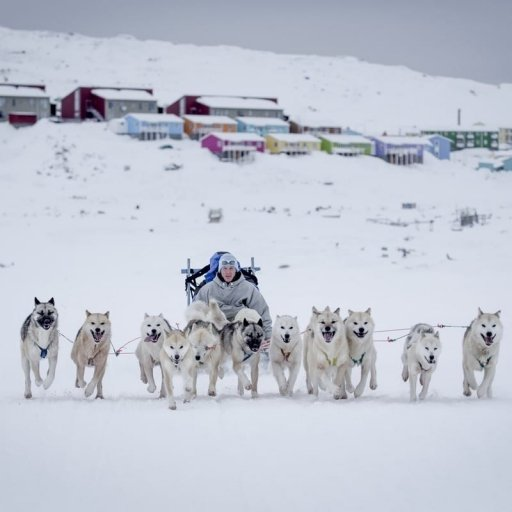 Dog sledding in Greenland