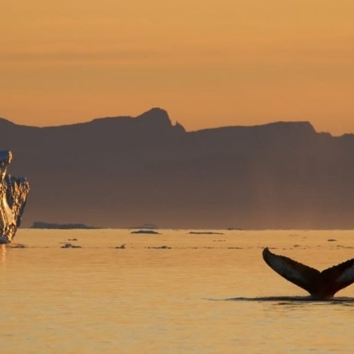 Whales in Greenland