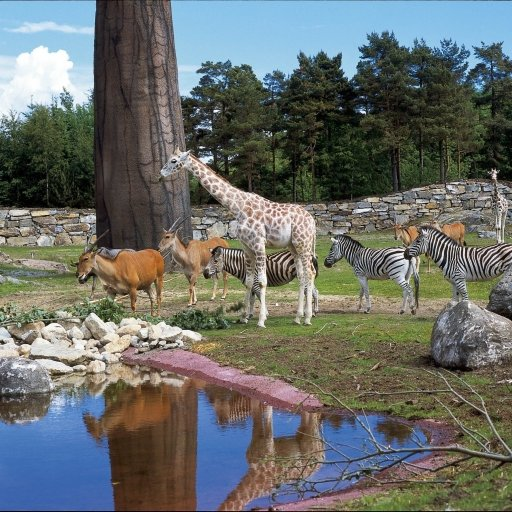 Kristiansand Zoo and Amusement Park